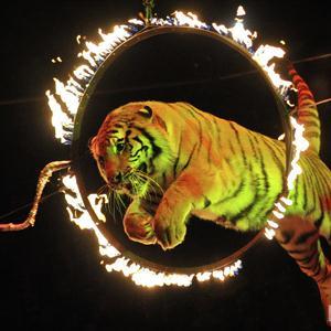 Цирки Кодино