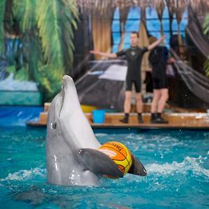 Дельфинарии, океанариумы Кодино