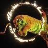 Цирки в Кодино