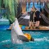 Дельфинарии, океанариумы в Кодино